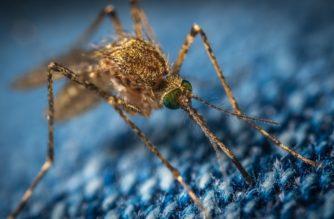 Die Mücke ist für viele Menschen im Sommer ein Quälgeist, trägt aber auch zu einem funktionierenden Ökosystem bei.